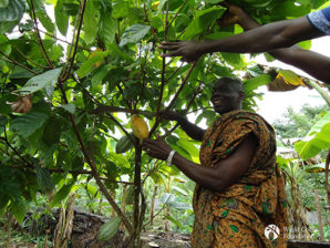 Cocoa industry agrees on action to stop deforestation