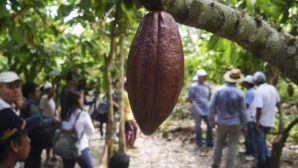 Barry Callebaut continues down path to 100% sustainability